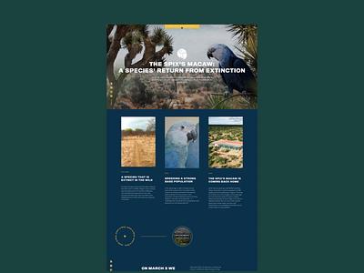 ACT Parrots: Landingpage Design logo design agency web ux ui website