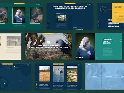 ACT Parrots: Landingspage Design logo design agency web ui ux website