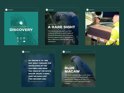 ACT Parrots: Social Media Design animation ig instagram social media design agency branding