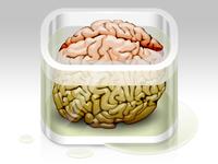 Brain in formaldehyde