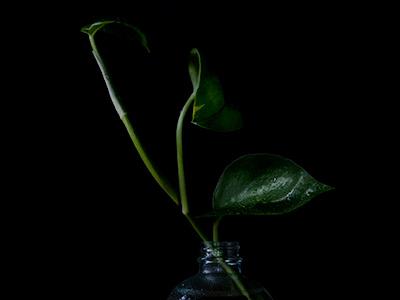 Plants on black lighting black glass photography plants