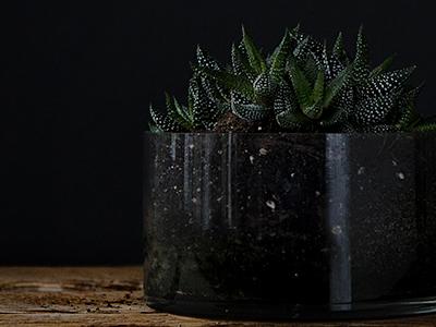 Plants on black 2 succulent natural light lighting black glass photography plants