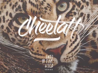 Cheetah Into Wild