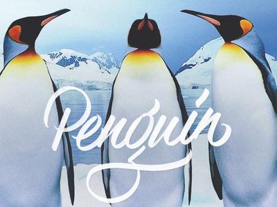 Into The Wild | Penguin