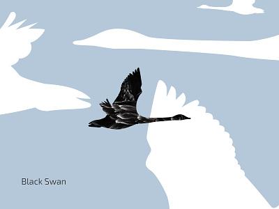 Black Swan fly bird sky swan black