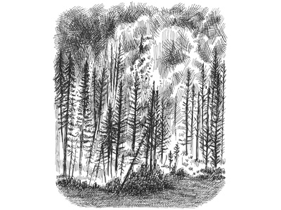 Forest Fire black and white artist crosshatching ink hand drawn art artwork sketching sketch drawing illustration