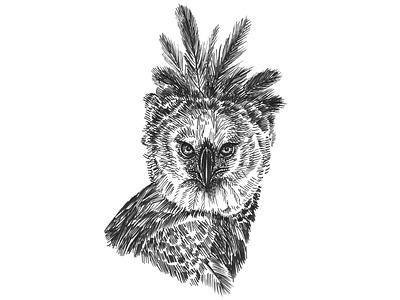 Harpy Eagle Sketch pen and ink bird eagle sketch art ink artist hand drawn artwork drawing illustration