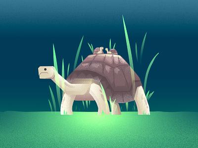 Galapagos Tortoise galapagos shell tortoise grain nature gradient illustration noise texture creatures blue animal
