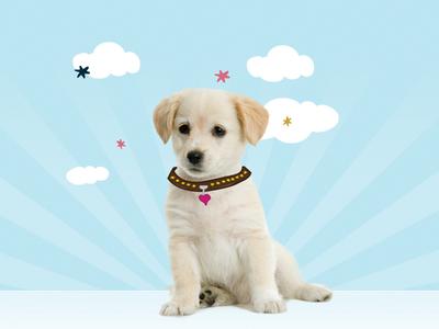 Custom Puppy Banner Close Up ilustration design banner custom dog graphic pet art direction web design
