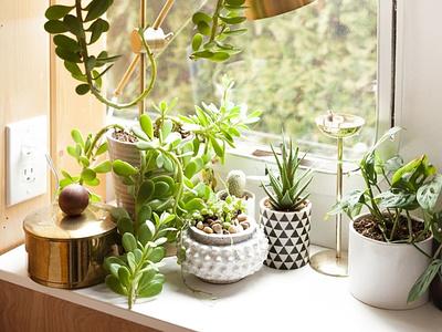 Cây trồng trong nhà tốt cho sức khỏe houseplant flowers sketch