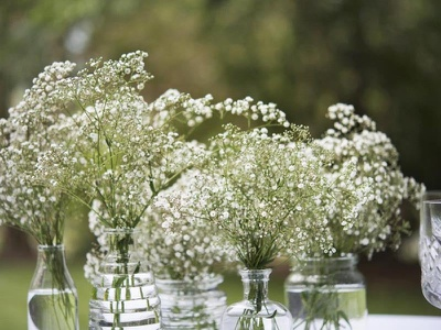 Baby flowers breath flowers baby breath baby shopesales