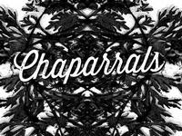 Chaparrals Gig Poster