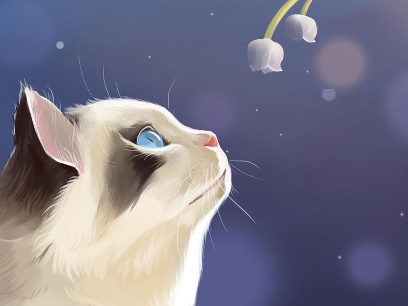 Cat cute pet