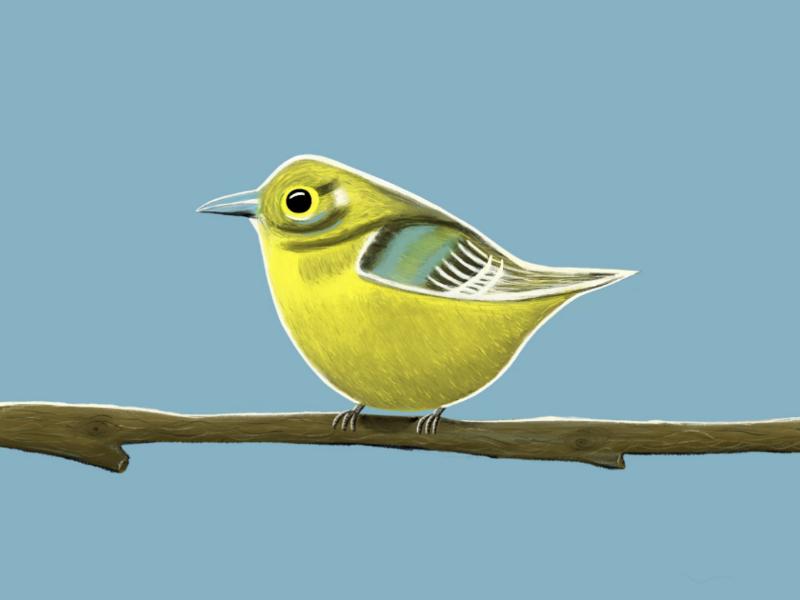 Tweet tweet. digital art digital colour illustration bird ipad pro procreate