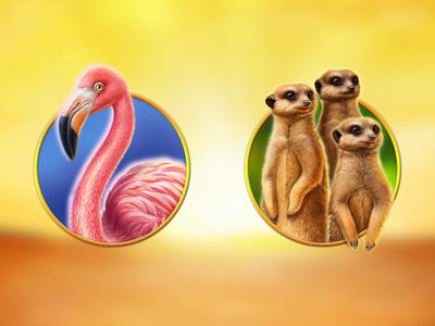 Hot Safari africa graphic designer character design art slot machine game art game design digital art designer 2d animation animator suricates flamingo spine after effects flash animation animals safari hot