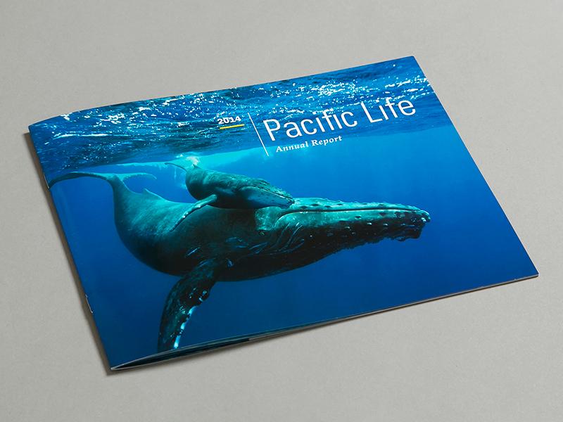 Pacific life dribbble 1