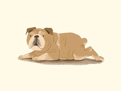 Bulldog digital painting bulldog photoshop dog