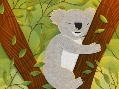 Koala proceate koala bear illustration