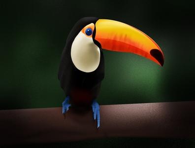 Toucan Drawing illustration yellow green jungle toucan drawing
