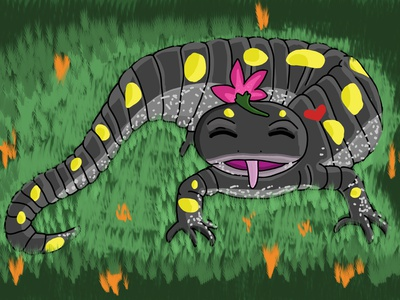 Happy Salamander animal art animals salamander digital illustration digital painting adobe photoshop illustration art