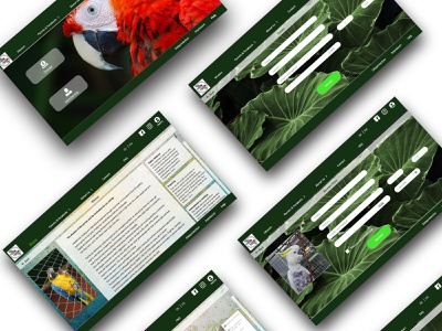 Visual design for Web - Working Group on Parrot Protection xd design design web ui