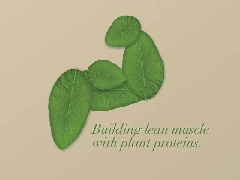 Plant Protein Image leaves health fitness muscle soy plant protein