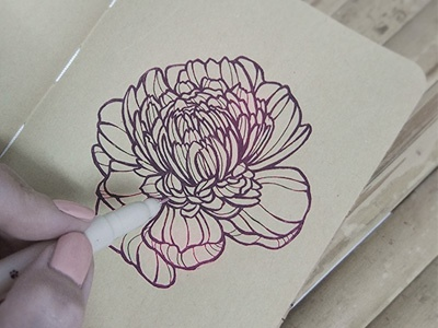 Flower sketch paper pen peony flower handdrawing sketch illustration