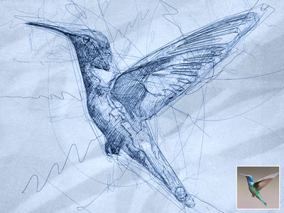 Scribbled Hummingbird scribbles scribble art scribble automatic effect drawing digital illustration pen sketch sketch sketchapp photo effect photoshop action digital art plugins