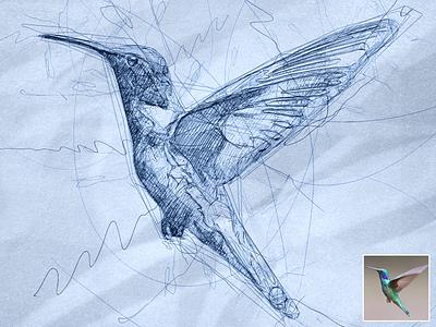 Scribbled Hummingbird scribbles scribble art scribble automatic effect drawing digital illustration pen sketch sketch sketchapp photo effect photoshop action digital art plugins