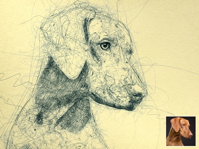 Scribbbled Vizsla scribbles scribble art scribble automatic effect drawing illustration pen sketch sketch sketchapp photo effect photoshop action digital art plugins
