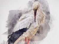 Stork - Watercolor Artist Photoshop Action
