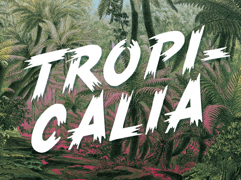 Tropical font free download