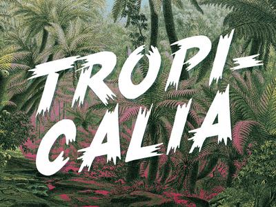 Tropicalia Brush Typeface - Free Font type typeface brush font freefont tropical nature music tropicalia