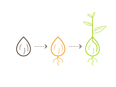 Creating a new digital product image crowfunding growing plant seed