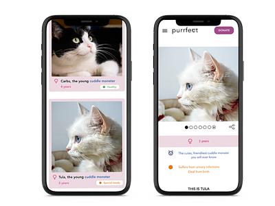Cat adoption website web ux ui design cats
