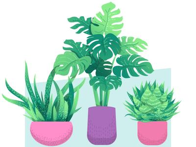 Plants iterations