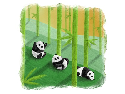 Panda Rolls cute playful fun childrens book illustration wildlife nature watercolour pencil drawing digital art illustration design art characterdesign character bamboo panda