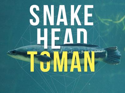 Snake Head Toman