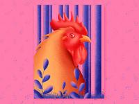 Wild Chicken in Kauai