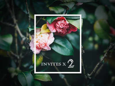 2 Dribbble Invites to Giveaway giveaway invites dribbble
