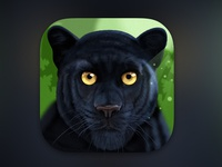 Panther app icon
