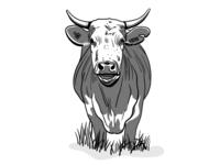 Steer 💔