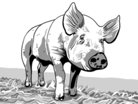Sweet Pig 🐷