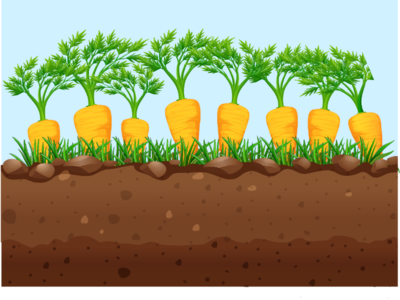 Carrots ilustration tree background ground soil vegetable food