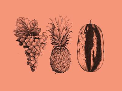 Fruit Sketches kpop red velvet album art grape pineapple watermelon fruit art food drawing graphic design design illustration