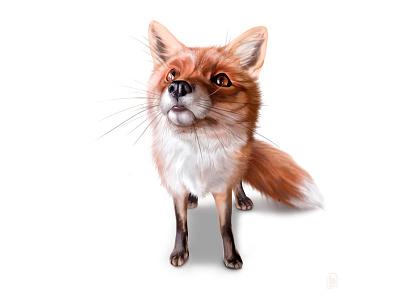Attentive fox fox illustration orange animal nice