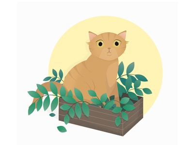 Cat in a box ginger cat pet animal cat in box cats plants cat