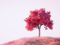 tree in pink