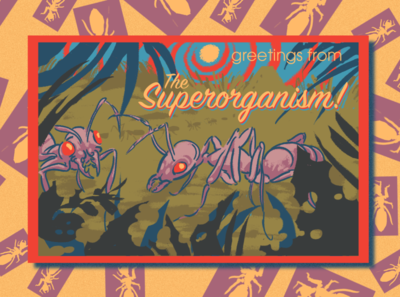 Greetings from the Superorganism! insect postcard biology creature life sketch ecology environment nature animal illustration design