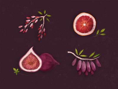 Fruit fruit grapefruit fig burberry honeysuckle